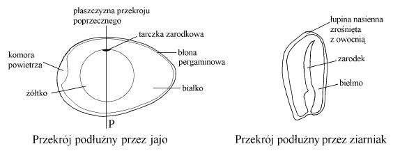Egzamin gimnazjalny 2003